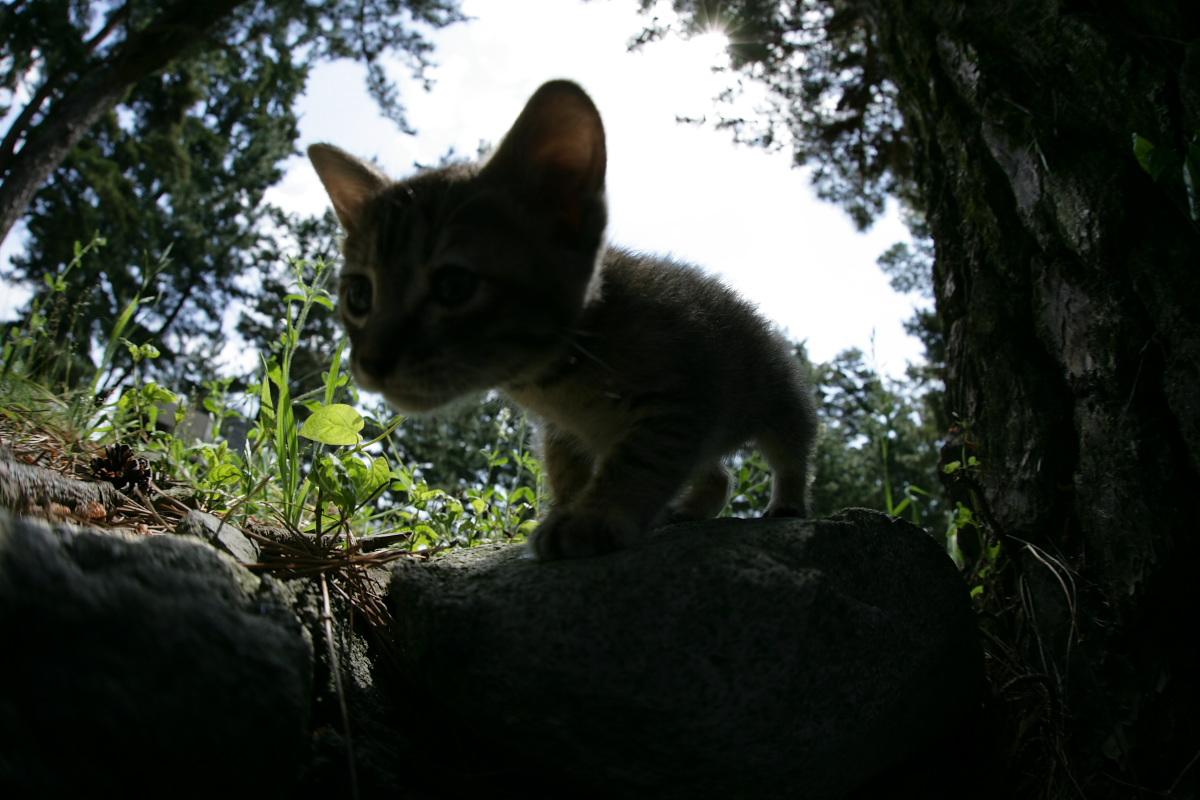 猫にゃん 1_f0021869_23512465.jpg