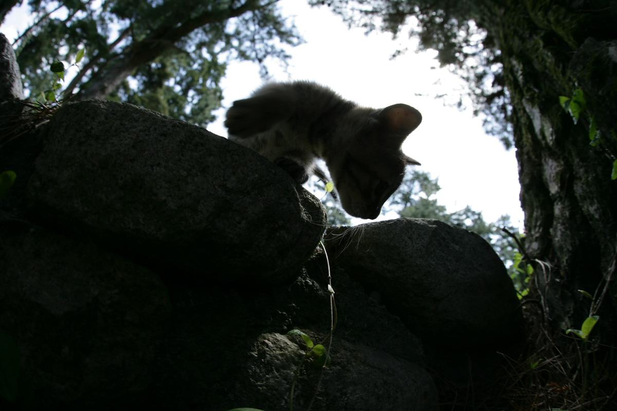 猫にゃん 1_f0021869_2351403.jpg