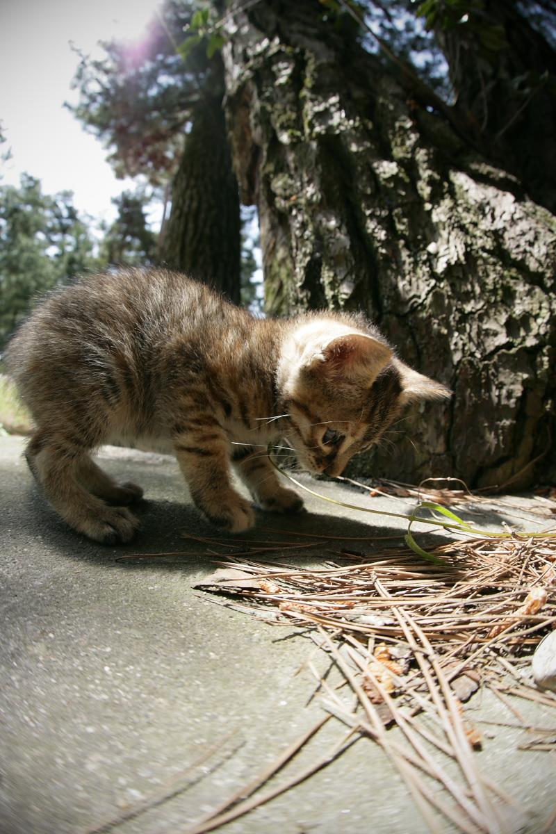 猫にゃん 1_f0021869_23524393.jpg