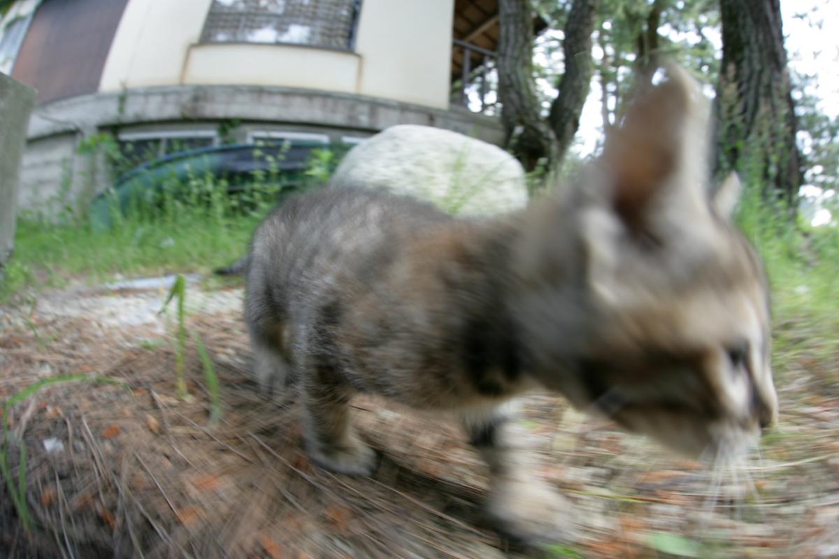 猫にゃん 1_f0021869_2352885.jpg