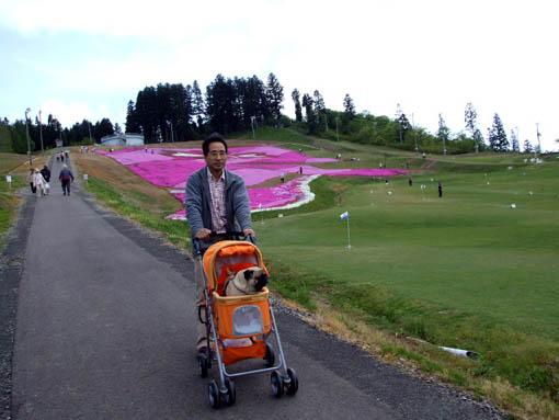 芝桜とあけびかご_f0019498_16434163.jpg