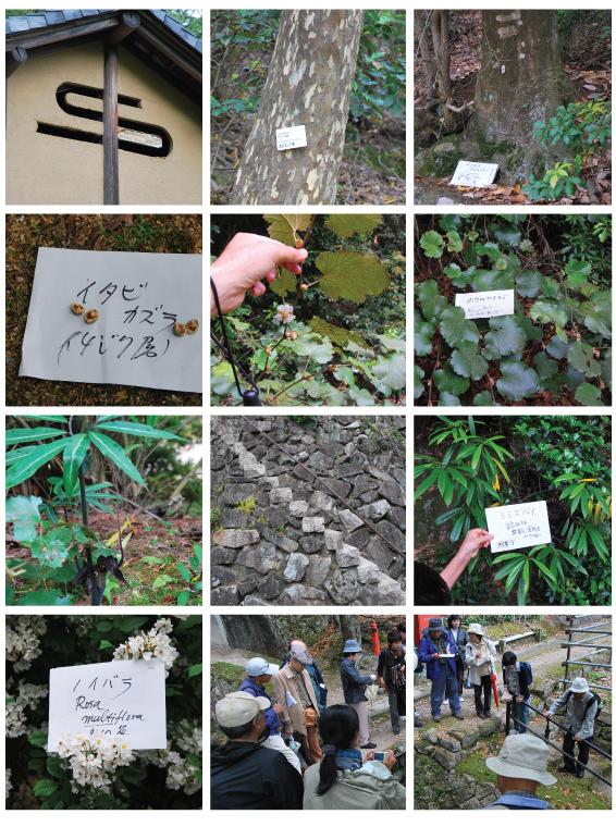 宮島の植物観察 「非凡なる凡島」_f0099102_2217241.jpg