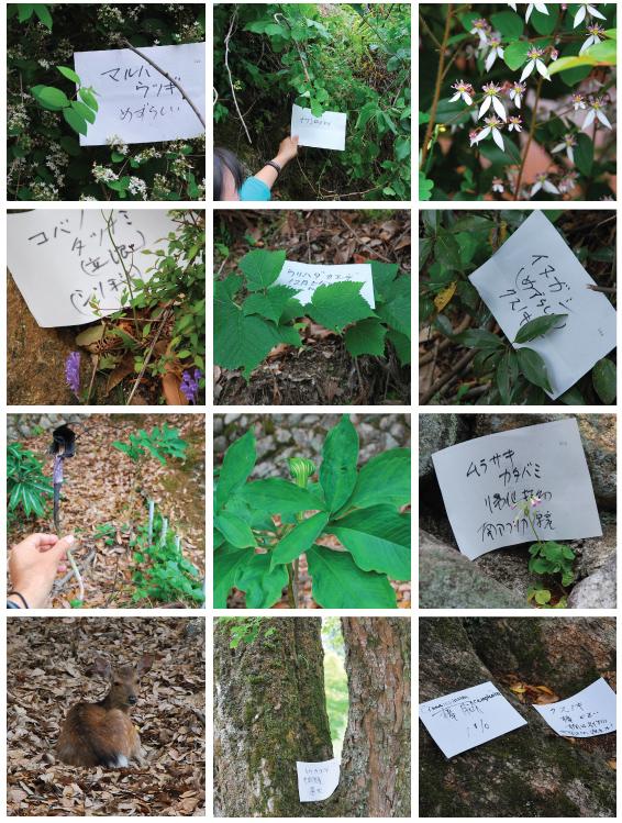 宮島の植物観察 「非凡なる凡島」_f0099102_221792.jpg