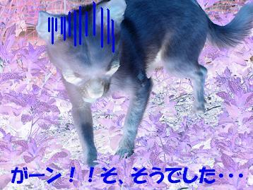 f0170713_13491762.jpg
