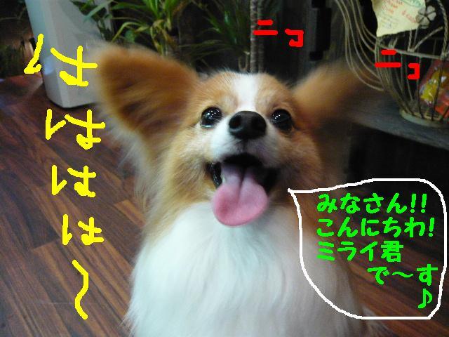b0130018_1031016.jpg