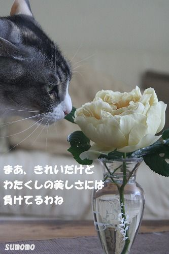 f0063729_001234.jpg