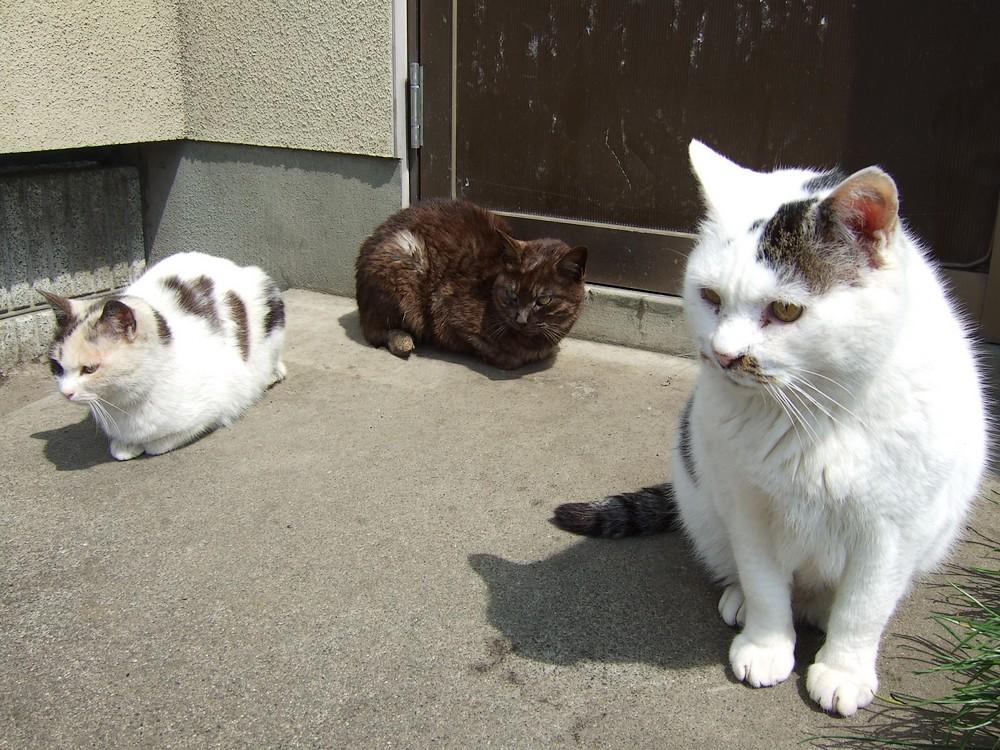 ネコ、朝の挨拶_d0001843_1952368.jpg