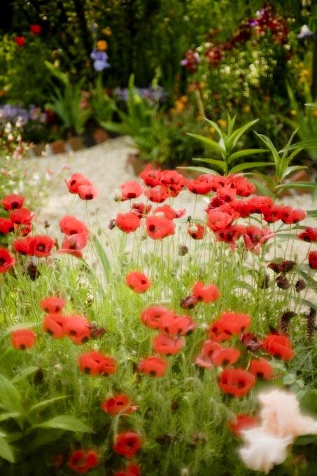 印象派の庭2_c0150383_2231488.jpg