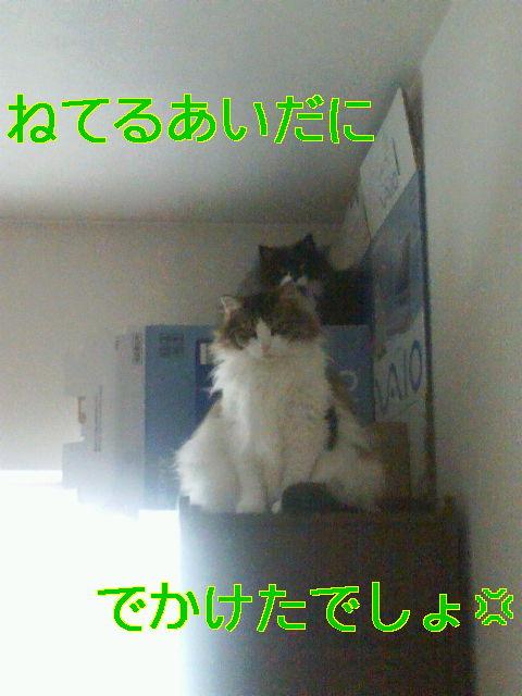 b0066487_1895285.jpg