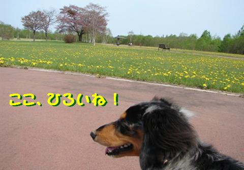 f0195891_16512999.jpg