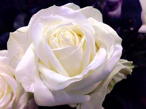 花を買う男_c0093101_23513422.jpg