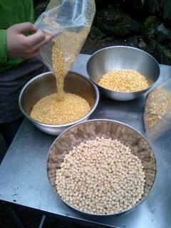 3種の豆を_c0033210_746673.jpg
