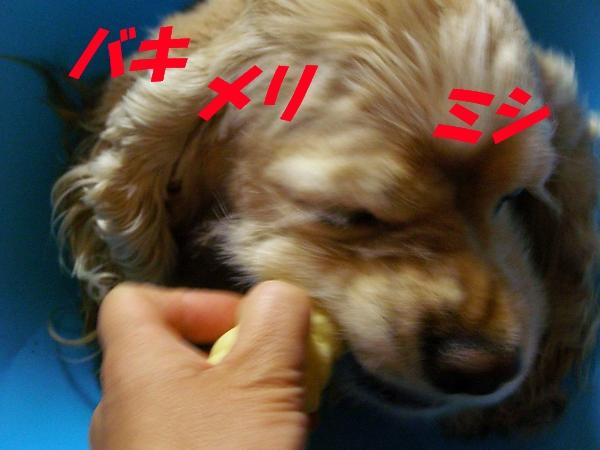 b0067012_21155534.jpg