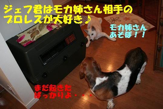 f0121712_1419425.jpg
