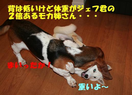 f0121712_1421716.jpg