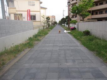 5月14日 写真撮影アース_e0136815_11481684.jpg