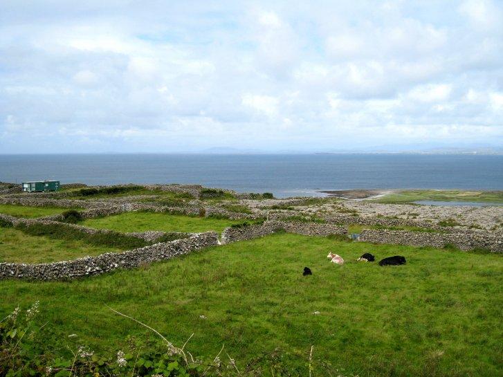 アイルランド編(48):イニシュモア島(08.8)_c0051620_8441799.jpg