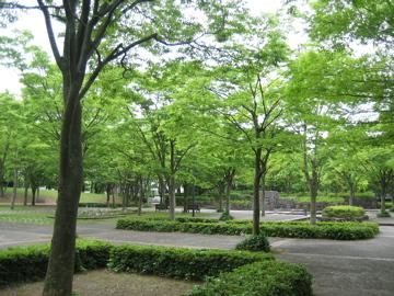 風薫る・・つくば公園通り_b0100229_8374496.jpg