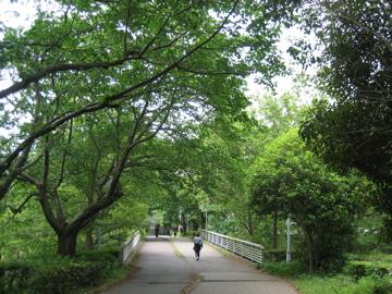 風薫る・・つくば公園通り_b0100229_8393928.jpg