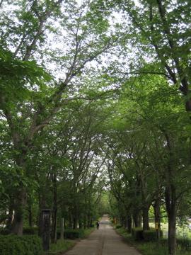 風薫る・・つくば公園通り_b0100229_845030.jpg
