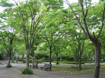 風薫る・・つくば公園通り_b0100229_8465476.jpg