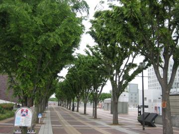 風薫る・・つくば公園通り_b0100229_8492298.jpg