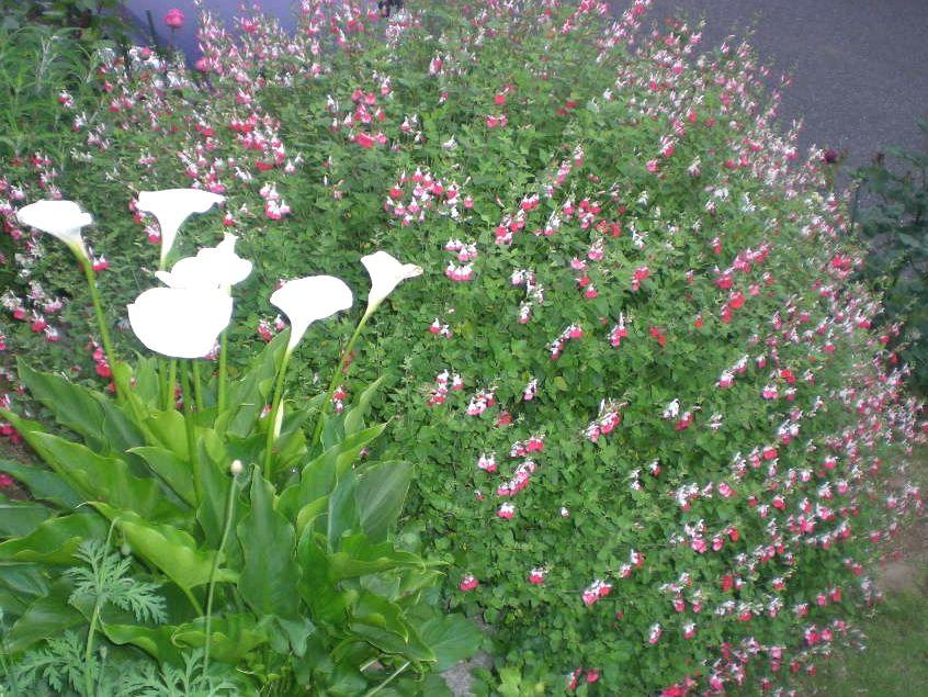 5月17日(日)薔薇のゴージャスディナー!!_f0060461_2272969.jpg