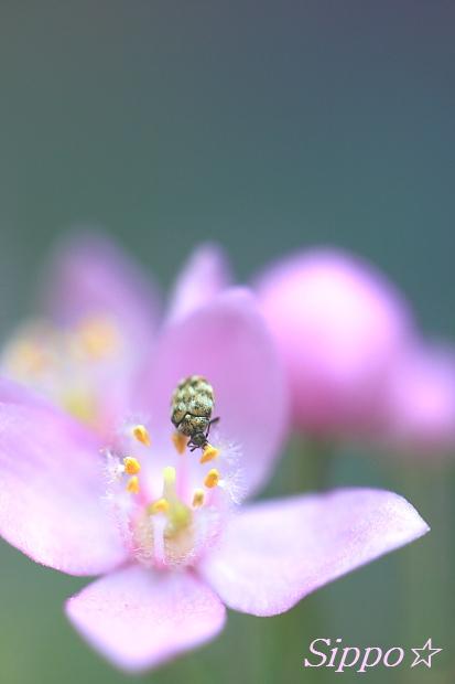 ■■花園■■_c0195662_18243073.jpg