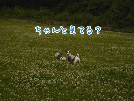 f0132772_2030422.jpg