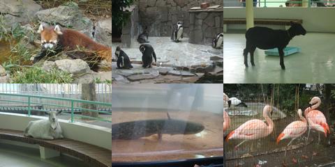 ばらと動物園(江戸川区)_d0132289_14251445.jpg