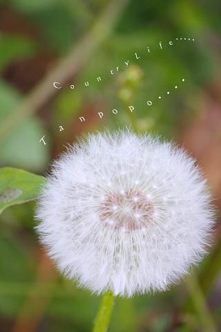 f0196089_23175515.jpg