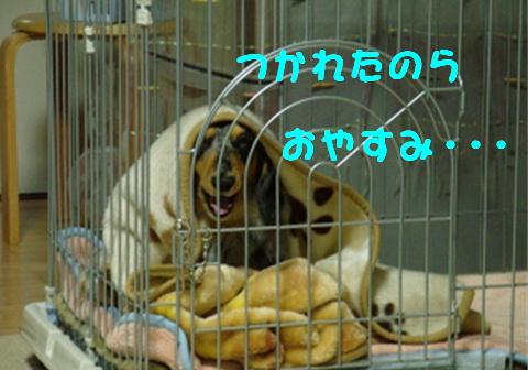 f0195891_1325088.jpg