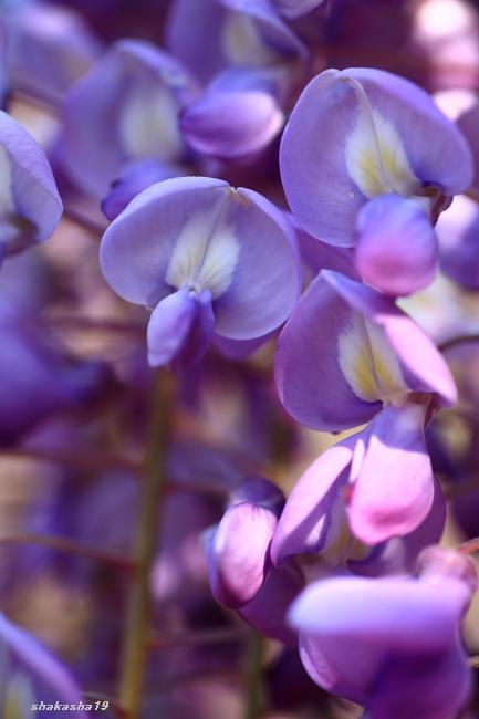 f0181310_20111458.jpg