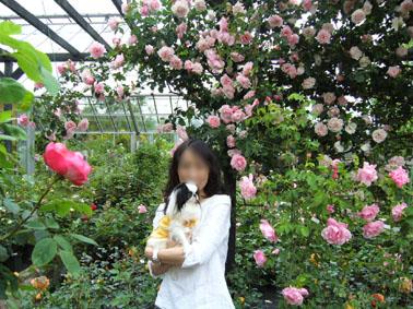 薔薇園へ_a0111125_19591079.jpg