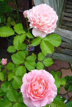薔薇園へ_a0111125_19594252.jpg