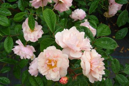 薔薇園へ_a0111125_200797.jpg