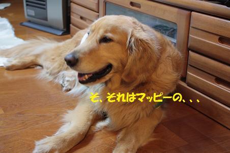 写真より遊ぼうよ!_f0114128_21392662.jpg