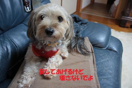 写真より遊ぼうよ!_f0114128_21404665.jpg