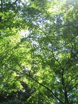 風薫る・・洞峰公園_b0100229_160269.jpg