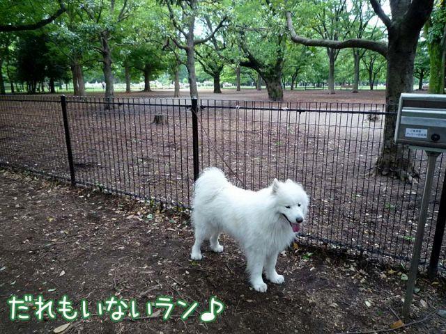 かわいい子羊ちゃん_c0062832_17112449.jpg