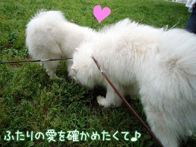 かわいい子羊ちゃん_c0062832_17113139.jpg