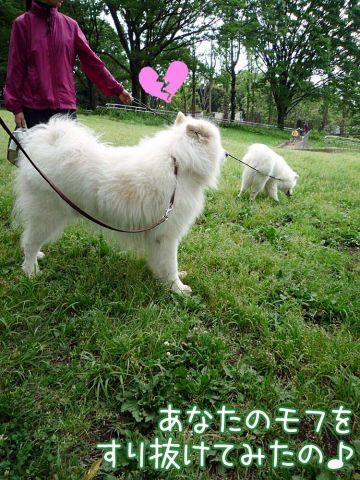 かわいい子羊ちゃん_c0062832_17113668.jpg