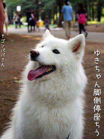 かわいい子羊ちゃん_c0062832_17114080.jpg