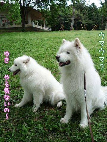 かわいい子羊ちゃん_c0062832_17114516.jpg