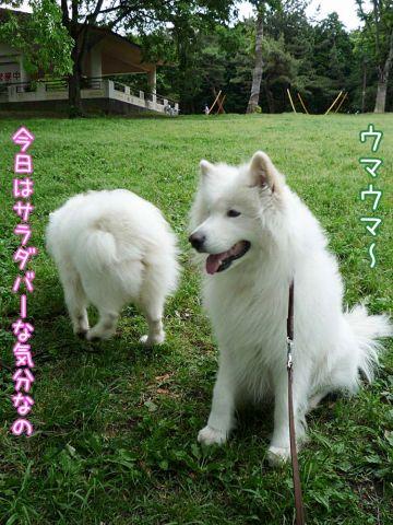 かわいい子羊ちゃん_c0062832_17115023.jpg