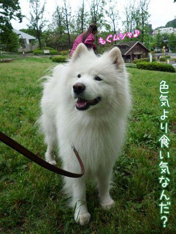 かわいい子羊ちゃん_c0062832_1712495.jpg