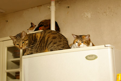猫らが落ち着かない・・・・_a0028451_19243590.jpg