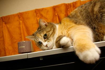 猫らが落ち着かない・・・・_a0028451_19244932.jpg