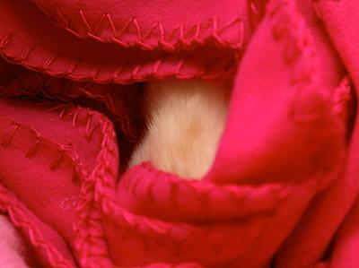 猫らが落ち着かない・・・・_a0028451_19321742.jpg