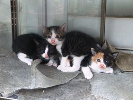 世界一かわいい野良猫の赤ちゃん、里親募集です!!_b0128954_10265416.jpg